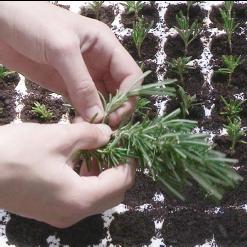 metier-horticulture